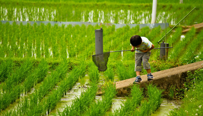 田んぼで虫を捕まえている少年