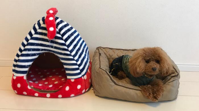 ペットのベッドとクッション