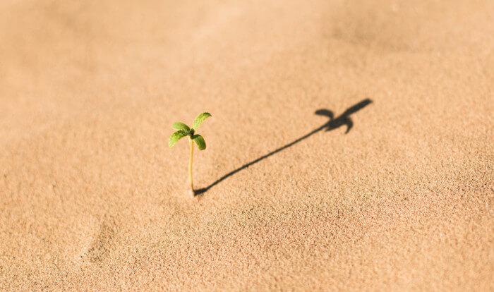 砂漠で芽を出した植物