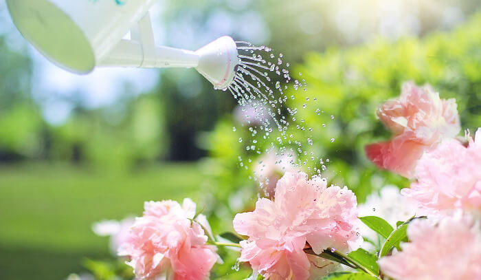 花に水をあげている写真