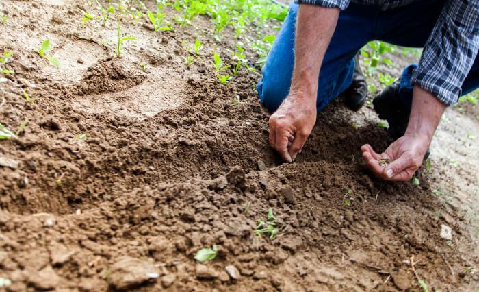 畑に種をまいている男性