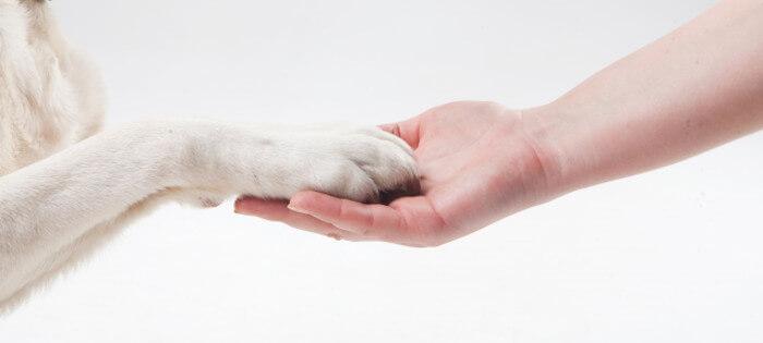 お手をしている犬の画像