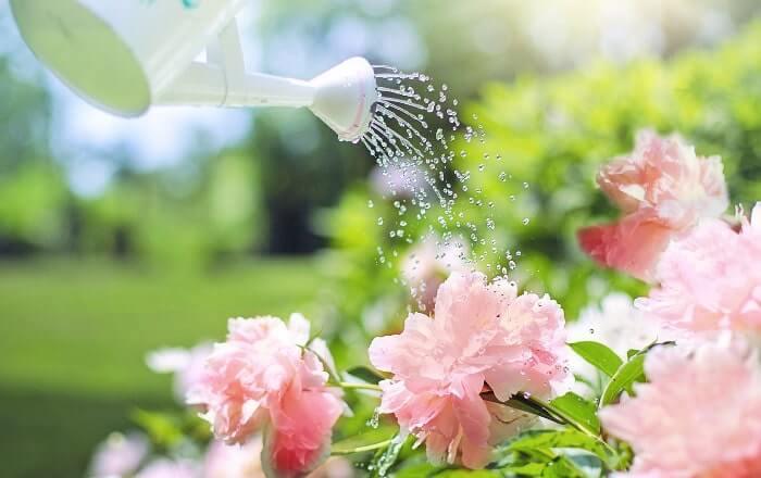 じょうろで花に水をあげている写真