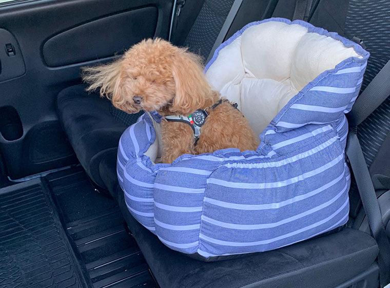 ドッグシートに乗っているトイプードル